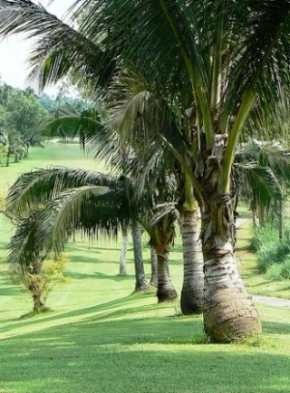 Canlubang Golf Course