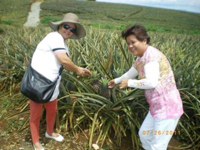 Pineapple parm in Bukidnon